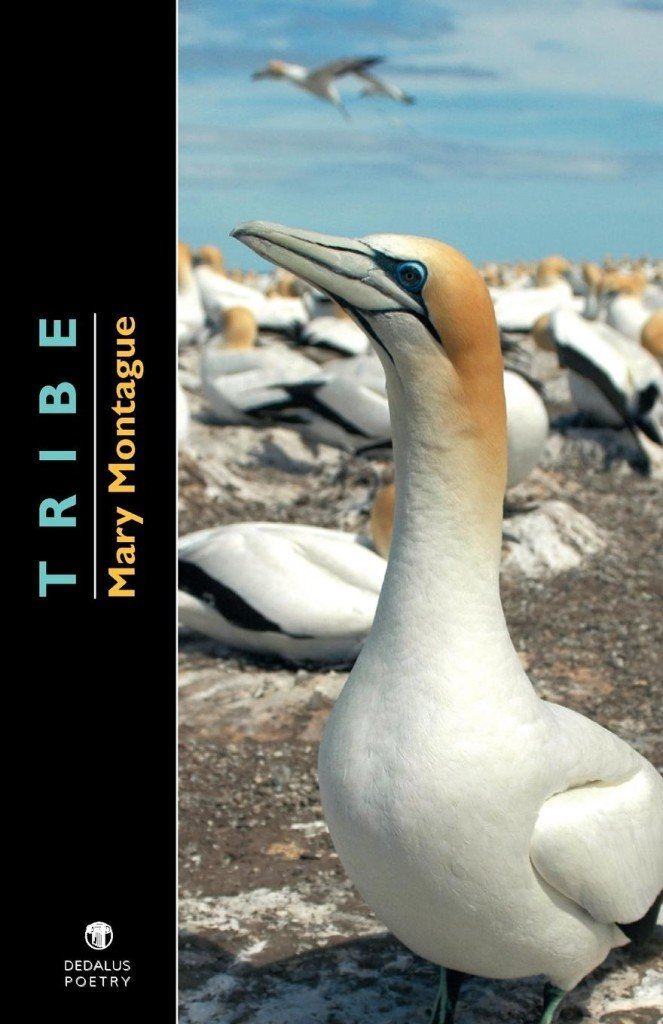 Tribe. Mary Montague. Dedalus Press, poetry from Ireland and the world